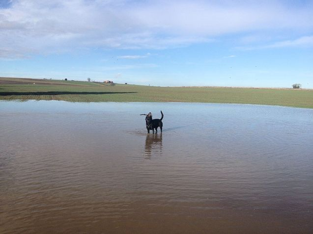 WADAR: It's important to stress that the dog is already being quite well catered for. In addition to extra air conditioning vents in the back – which Donna says are 'non-negotiable' - we're having the flood warning radar so we won't have to send him out to check the water level again.
