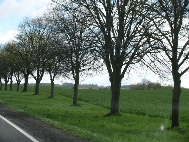 Sorry, we have a thing about tree-lined roads.