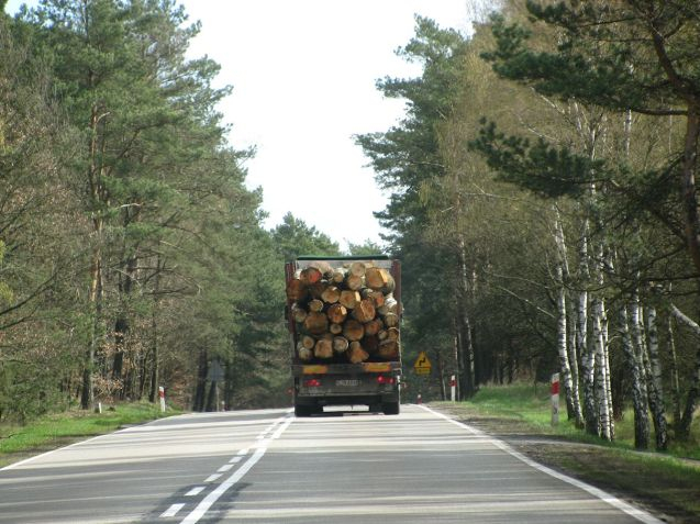 Logging trucks and lots of them. Not as slow as you might think.