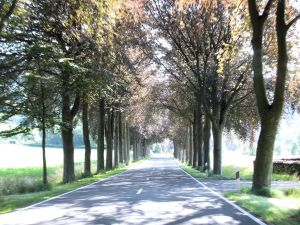 Endless miles of tree-lined roads in Luxembourg, but not for much longer.