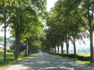 Killer trees: the end of tree-lined avenues, in Luxembourg at least. More later.