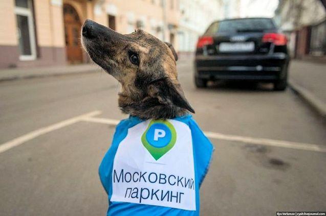 parking dog