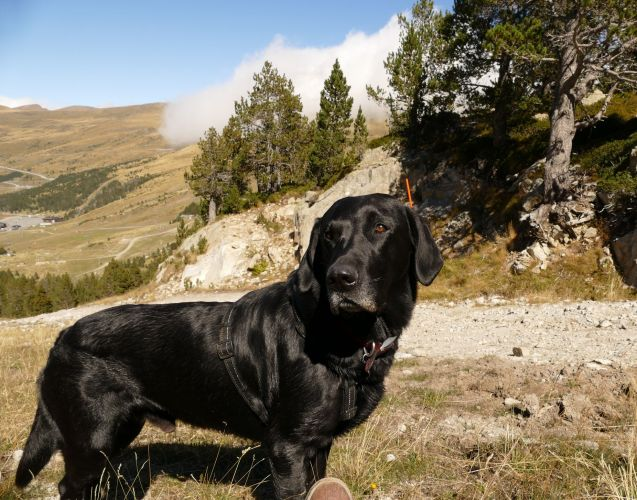 Whatever indignities were involved early on during the ferry crossing, it was a price worth paying for being able to take the dog on his first ever foreign holiday (and avoid too-long days in the car). Here in the French Alps above Saint Veran.