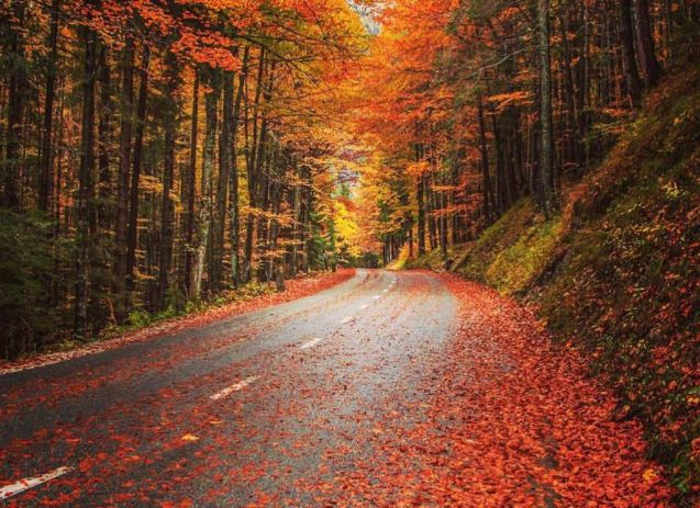 Nice autumn picture: 'on the way to the Vrsic Pass', Slovenia. Photo EJ Cheberle via @IGSlovenia